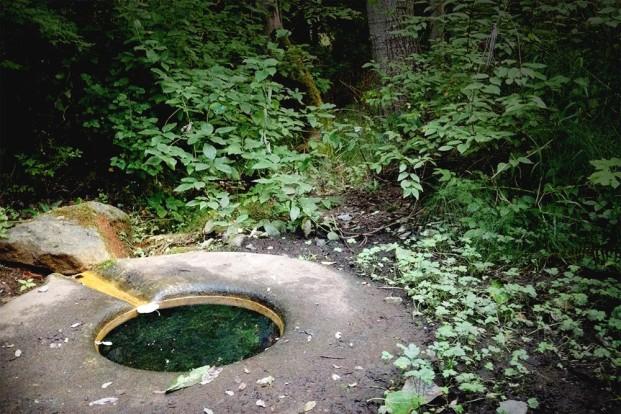 Duwamish Licton Spring, Seattle, Washington