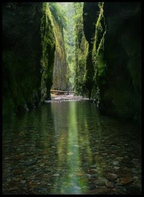 RedwoodStreamCanyon